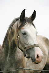Close-up of youngster racing horse in the field