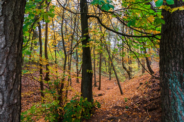 Bosque con Arboles  en Otoño