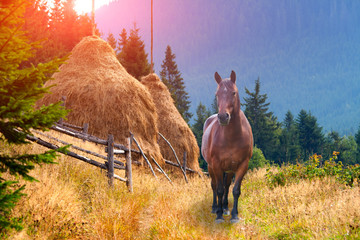 lonely horse in the mountains in autumn