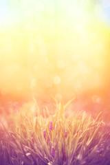 Romantic lavender flowers in sunset light. Instagram filter.