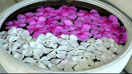 white and pink flowers floating in a bowl of water