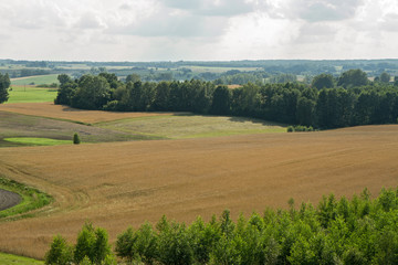 sown fields
