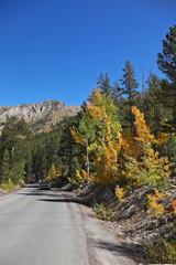 A car on road among colorful autumn foliage