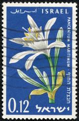 stamp shows pancratium maritimum, sea daffodil