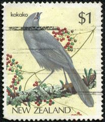 image of an endangered Kokako bird perched on a tree branch