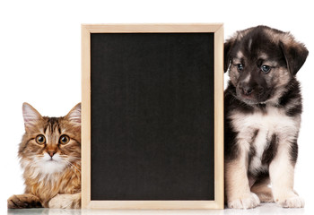 Pets with blackboard