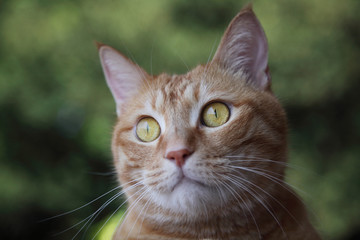Ginger cat on green background