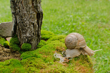 snail crawling over moss