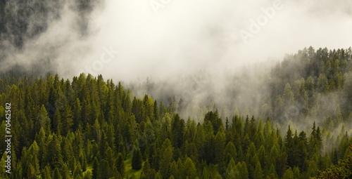 Aluminium Bossen Foggy forest