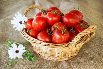Still life of a basket of tomatoes