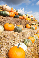pumpkins on a pale of straw