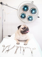 dog  in veterinary clinic near medical tool