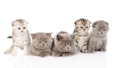 group baby kittens. isolated on white background