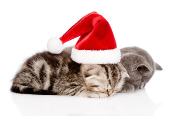 two sleeping kittens with santa hat. isolated on white backgroun