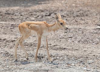 young baby deer in open field