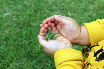 芝を摘む子供の手_橫