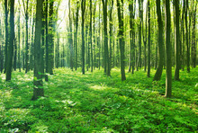 Zieleń lasów