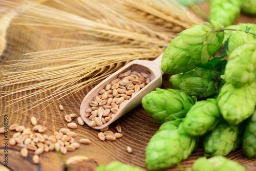 Leinwandbild Motiv Hopfen, Getreide