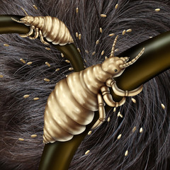 Lice In Hair