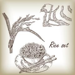 Rice set. Spikelet of rice, rice porridge, rice field vector