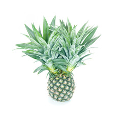 Green pineapple on white background.
