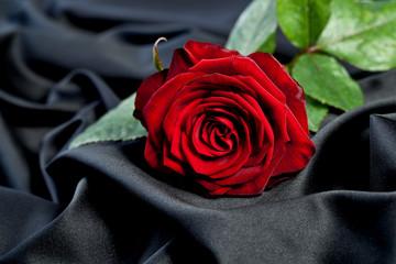 Rose auf schwarzem stoff