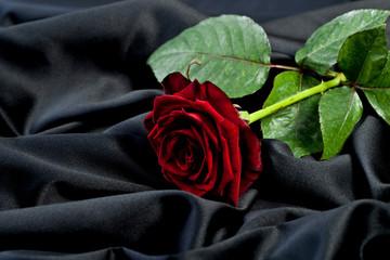 Red Rose on black silk