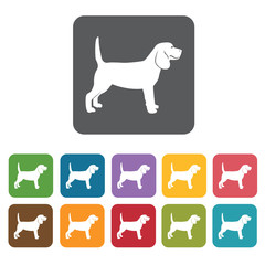 Beagle icon. Dog icons set. Rectangle colourful 12 buttons. Vect