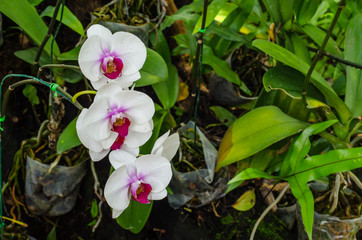 White orkids in the garden