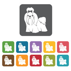 Maltese puppy dog icon. Dog icons set. Rectangle colourful 12 bu