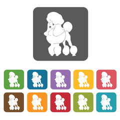 Poodle icon. Dog icons set. Rectangle colourful 12 buttons. Vect