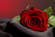 canvas print picture - Red rose love gift