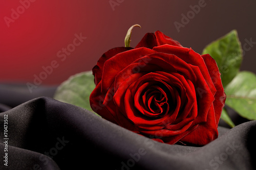 canvas print picture Red rose love gift