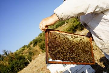 Petek ve arılar