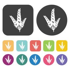 Wheat icon. Farming icon set. Round and rectangle colourful 12 b
