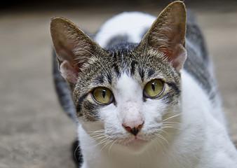 White cat portrait