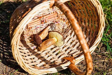 Two mushrooms in basket