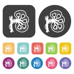 Lungs icon. Human organ icons set. Round and rectangle colourful