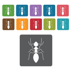 Ant icon. Insect icon set. Rectangle colourful 12 buttons. Vecto
