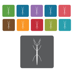 Stick insect icon. Insect icon set. Rectangle colourful 12 butto