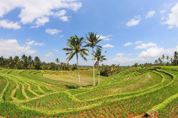 Indonésie 27