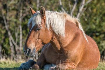 repos du cheval