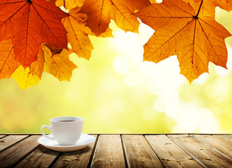 cup coffee and autumn forest