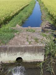 田んぼの用水路
