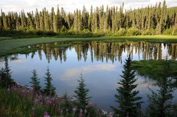 Pond in Morning