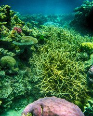 Beautiful underwater colors of Queensland Coral Reef - Australia