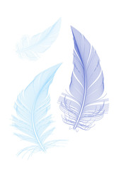 blue birds feathers, vector