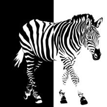 le noir et blanc