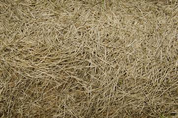 фон из сухой травы