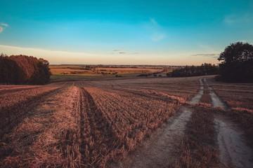 wheat field in august